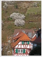 Heppenheim (Bergstraße) - Weinberg (vineyard)