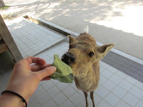 Cerf, Nara, Japon