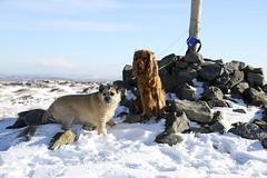 (LYNNE Mc) Tags: winter snow dogs canon lancashire hills fells 5dmk3