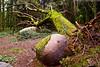 Fallen tree (paulo_1970) Tags: tree canon sintra fallen 7d árvore 1022mm peninha f3545 canon1022mmf3545 canon7d paulo1970