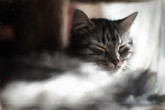 Shadowed Light (Light Echoes) Tags: winter pet animal cat 50mm nikon katten kat feline gate chat boo gato katze cath  macska gatto  kot gat koka kedi kass  katt topaz kissa maka kucing bugaboo 2014 mo    d90 kat  miv kalo pisica kais    qattus    vighro