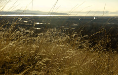 Golden Grass (Karen McQuilkin) Tags: afternoon hike antelopeisland goldengrass karenmcquilkin