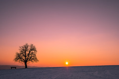 Sunset Einkorn (bpazi) Tags: schnee winter sunset sky sun snow tree nature landscape minolta sony horizon natur wideangle explore landschaft a7 horizont schwbischhall ferne 17mm anothersunset alpha7 sunsetporn skyporn specland inexplore minolta1735 einkorn sonya7