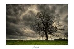 la pluie arrive ! (Francinen89) Tags: trees cloud storm tree clouds ciel nuage nuages paysage arbre orage