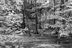 Across Sandstone Creek (joeldinda) Tags: blackandwhite bw tree monochrome creek nikon michigan may parks shadowplay lightandshadow v2 grandledge 2016 fitzgeraldpark eatoncounty 3137 1v2 nikon1v2