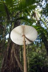 _ITA3397 (Edson Grandisoli. Natureza e mais...) Tags: cogumelo mata corpo fungo mataatlntica frutificao regiosudeste
