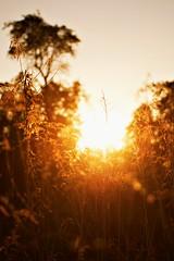 memory of light (A.Ciepielewska) Tags: lighting trees light sunset sun tree nature field sunshine june landscape gold nikon warm shine bright outdoor poland polska natura gloss rays fullframe fx soce wiato naturelovers zachdsoca lubelskie promienie goldsun wiatocie polishphoto nikond610 nikon610