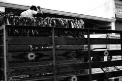 @ Parrys corner (Kals Pics) Tags: parrys sowcarpet men workers market vehicles lorry automobiles cwc roi chennaiweelendclickers rootsofindia pov perspective life people streetlife chennai tamilnadu india blackandwhite monochrome singarachennai kalspics