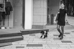 lockstep (edwardpalmquist) Tags: street city people urban blackandwhite woman dog monochrome fashion japan shopping tokyo shibuya poodle harajuku