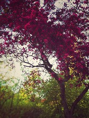 The beauty of spring (Get inspired Photography) Tags: pink flowers tree nature beautiful beauty spring saveearth