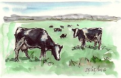 Vacas lecheras (P.Barahona) Tags: naturaleza ganado animales estudios vacas apuntes prados