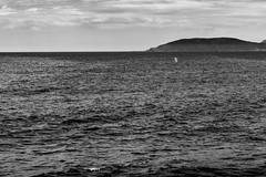 whell whell whale