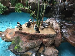 "Penguins at the Dallas Aquarium • <a style=""font-size:0.8em;"" href=""http://www.flickr.com/photos/109120354@N07/27244274164/"" target=""_blank"">View on Flickr</a>"