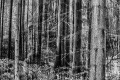 forest (sami kuosmanen) Tags: luonto light landscape long exposure etel europe suomi finland forest black mets mustavalko photography puu pitk valo valotus intentional camera movement maisema icm creative nature north tree tumma dark