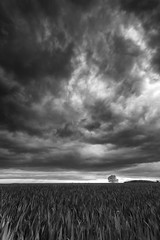 Storm Hour (Kathy ~ FineArt-Landscapes) Tags: blackandwhite storm tree nature monochrome field mood nottinghamshire