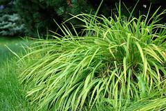 Small Summer Plants (jonathanli12) Tags: bridge lake sports nature grass sign basketball pine landscape pond michigan logs peaceful greenery serene shrubs hdr