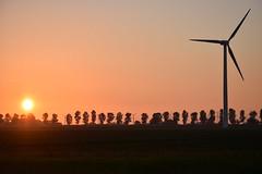 Sunset behind the trees (Niels van Bemmel) Tags: trees sunset sun holland tree netherlands windmill field grass evening zonsondergang nikon sundown wind dusk nederland line pasture turbine flevoland the swifterbant unlimitedphotos d5300 afs55300