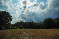 DP0Q2669lr (yoshitoshi ABe) Tags: sky cloud sigma  dp0quattro 20160626