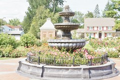 11823068_10153099687242076_6154934196777513074_o (jmac33208) Tags: park new york roses rose garden central schenectady