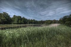 Pond in the dunes. (Wilm!) Tags: netherlands pond dunes duinen hdr vijver rockanje tenellaplas