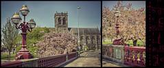 (Paul B0udreau) Tags: pink scotland diptych blossoms lamppost paisley paisleyabbey abbeybridge duoimage