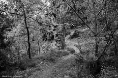 (Giorgos-S) Tags: blackandwhite landscape fuji parnitha x100