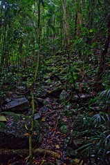 Damp (Eustaquio Santimano) Tags: park bridge green forest moss ancient natural natur australia national queensland damp springbrook