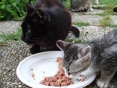 05062016N12 (starezubre) Tags: gatti giardino 2016 gattini mamme giocchi
