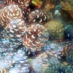 Cone Conference (JangoFeldman) Tags: painterly texture photomanipulation photoshop effects pinecone layered picmonkey