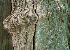 Tree trunk detail (Modesto Vega) Tags: tree monochrome insect iso800 blackwhite nikon treetrunk d600 treetrunkdetail