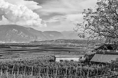 Blick auf Bozen (mirko.borgmann) Tags: white black detail canon landscape sharp 1750 tamron landschaft weiss schwarz hdr bozen 600d