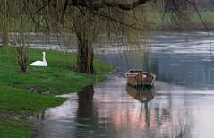 A peaceful place (marko.erman) Tags: sunset sun tree nature water reflections river golden boat swan peaceful calm slovenia serenity romantic serene slovenija krka kostanjevica kostanjevicanakrki
