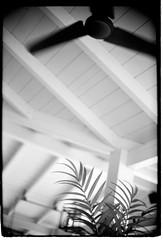 holiday feelings (look-book) Tags: leica m6 dreamlens canon f095 50mm lookbook analog blackandwhite sw analogous analogue anlogo film trix d76 fotos foto analogicas bw selfdeveloped blackwhite black white blancoynegro noiretblanc