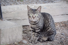 Today's Cat@2013-05-10 (masatsu) Tags: cat canon catspotting thebiggestgroupwithonlycats powershots95