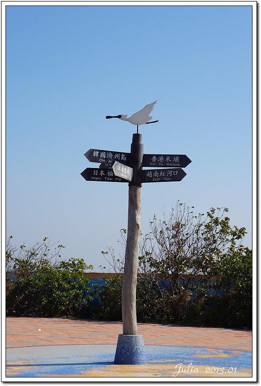賞鳥 (2)