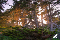 Into the Redwoods (Christian Arballo) Tags: california trees mist northerncalifornia landscapes monterey carmel redwoods earthday californiacoast pointlobosstatereserve