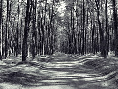 (Hanna IV Photography) Tags: road park light shadow summer bw white black tree nature forest landscape russia curonianspit nikond90