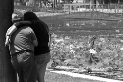 Father & Daughter (npphotog) Tags: la losangeles waterlily southerncalifornia echopark lotusflower echoparklake urbanlake panasonicfz200