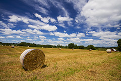 Hay Harvest (Matt Champlin) Tags: life summer sky food usa ny nature beautiful barn rural canon painting peace farm country farming harvest peaceful fields upstatenewyork production hay pristine hayharvest 2013 roundhaybales