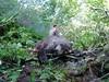 Alaska Moose and Bear Hunt - Dillingham 35