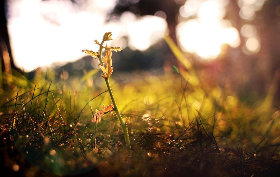 Bokeh_Sapling_by_theederv