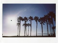 Venice Beach (teacup_dreams) Tags: california venice trees summer usa beach cali landscape los angeles palm instax 210