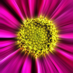 Cosmic Cosmos. (Yvette-) Tags: flower center macromondays inthecentre nikkorf28105mm nikond5100