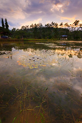 reflection of dramatic sky on a pond (Macbrian Mun) Tags: wood sunset sky cloud lake reflection nature water colors beautiful sunshine weather clouds rural forest landscape outdoors mirror evening twilight pond scenery colorful asia warm sundown natural bright cloudy outdoor dusk dramatic scene calm malaysia borneo idyllic sabah tranquil cloudscape scenics waterscape