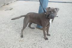DSCF7756 (Moldovia) Tags: dog pet animal pointandshoot mongrel pointshoot fujifilmfinepixhs20exr