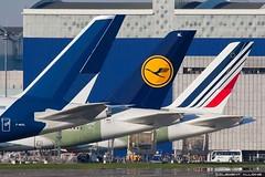 Airbus Industrie Airbus A380-841 cn 002 F-WXXL ////// Lufthansa Airbus A380-841 cn 149 F-WWSX // D-AIML   //////// Air France Airbus A380-861 cn 117 F-WWSV // F-HPJJ (Clément Alloing - CAphotography) Tags: test france cn canon airplane airport aircraft air flight airbus toulouse airways aeroport aeropuerto lufthansa industrie blagnac spotting 002 tls 117 149 100400 fwxxl a380841 lfbo a380861 fwwsx daiml fwwsv fhpjj