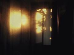 E' tutto sulla luce. (L'instant c'est moi) Tags: trees light sunset sun sunlight house detail home window nature kitchen beauty wow garden gold soft drawing miracle explore observe breathe inhale admire breatheless