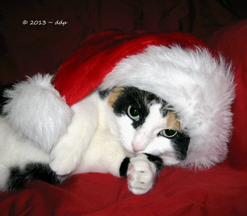 HRH Trinity Rose de Montecore the Calico Cat wishes You a Merry Christmas!