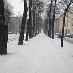 Tree-lined Munkkiniemi bike path thumbnail