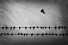 I'll be back (. Jianwei .) Tags: street sky urban bird birds animal vancouver fly blackwhite pigeon nex jianwei allbutone kemily nex6